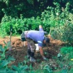 Gardening and Back Pain