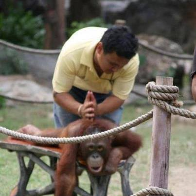 monkey getting adjusted by chiropractor